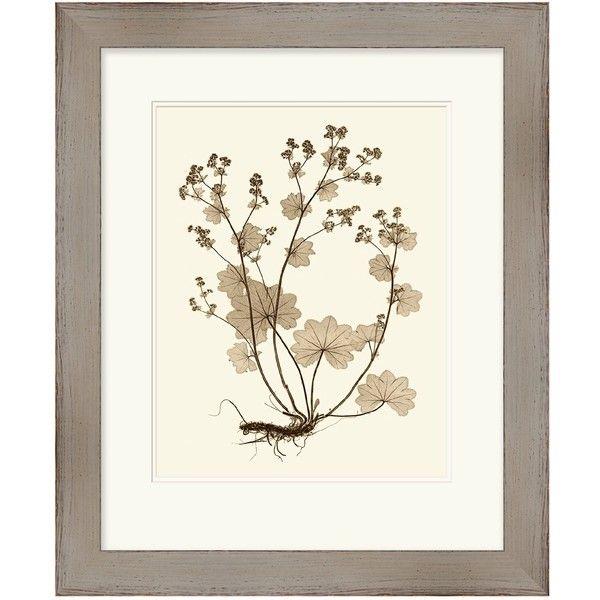 Surya Sepia Nature Study I Wall Art ($197) ❤ liked on Polyvore ...