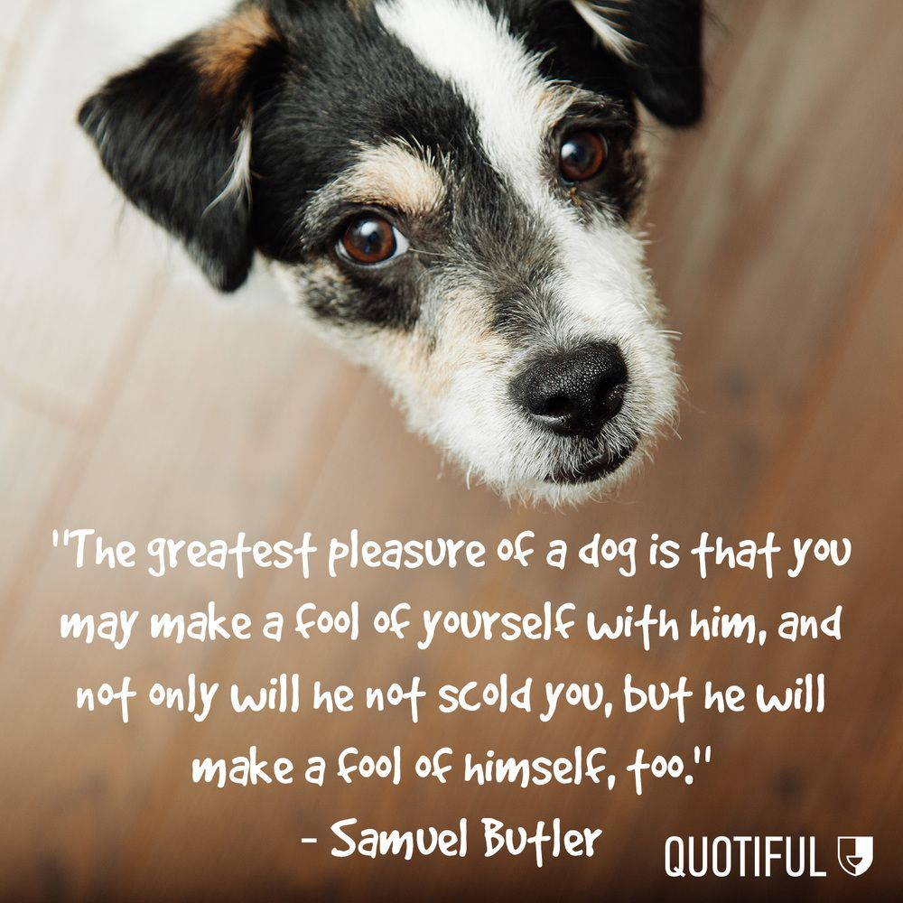 Love Animal Quotes Dog Quotes  Quotes  Pinterest  Dog Quotes Dogs And Dog Day