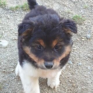 美人です デイジー 茨城県 犬の里親募集 305414 ペットのおうち 月間利用者150万人 犬 ペット 里親
