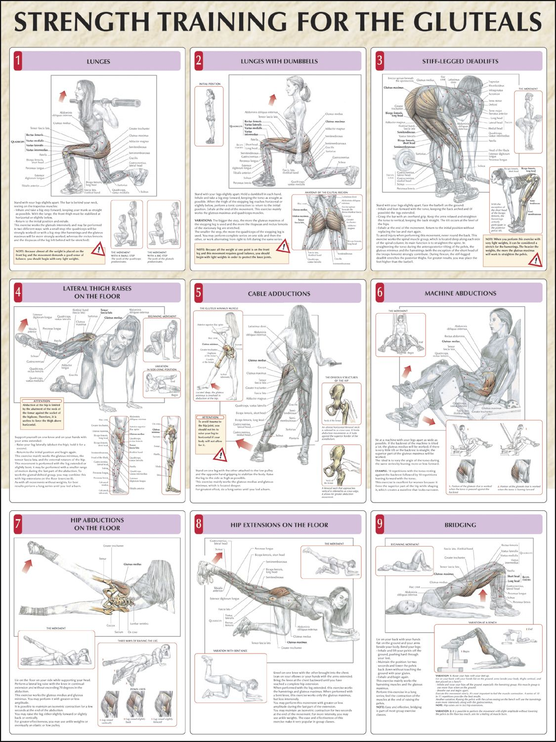 Knee Pain Reduced With Hip Strengthening Exercises   Pinterest ...