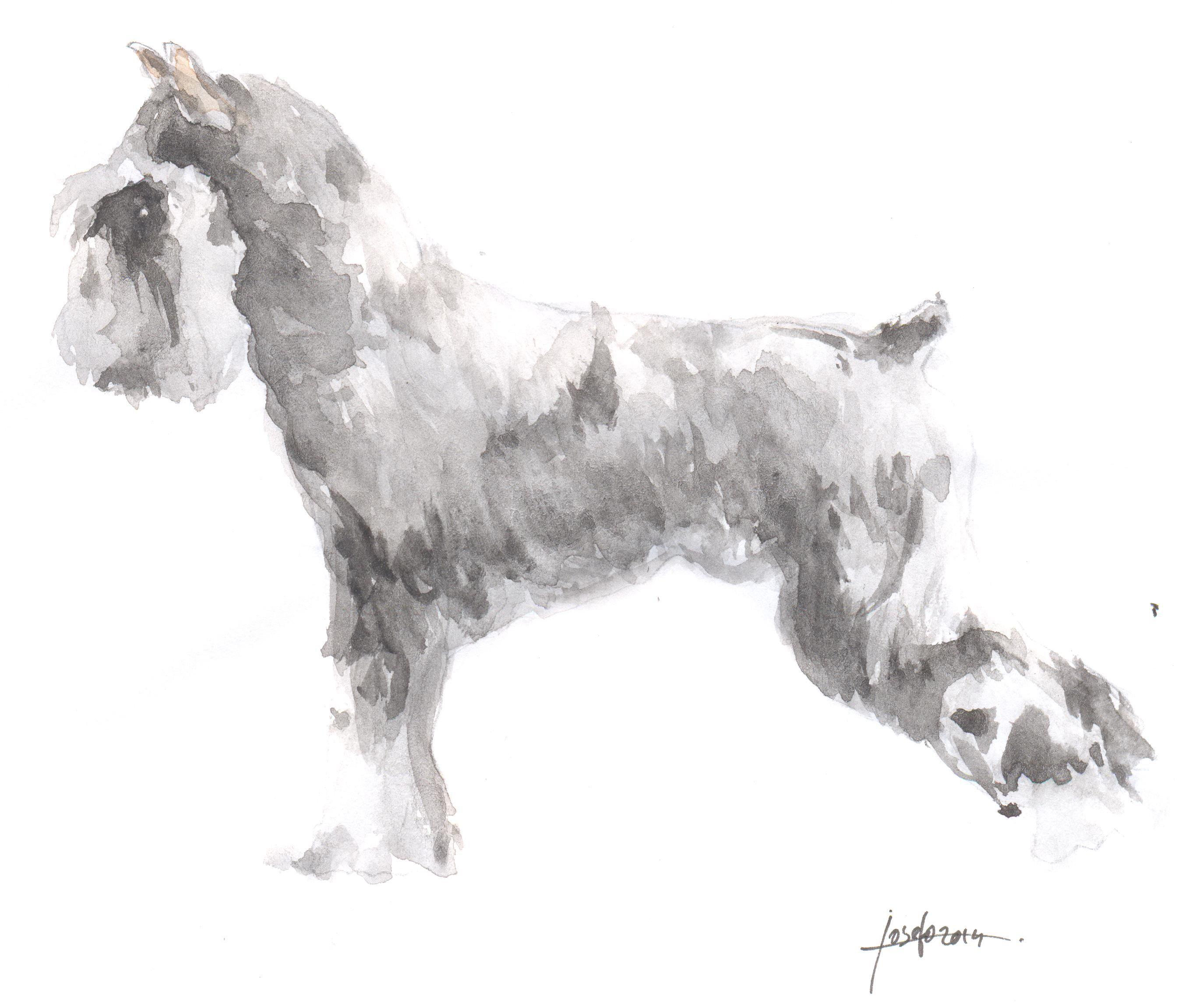 Imagenes Para Colorear De Perros Rottweiler Para Frasesamor Website
