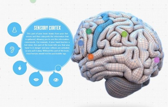 your brain map  strategies for accelerated learning infographic