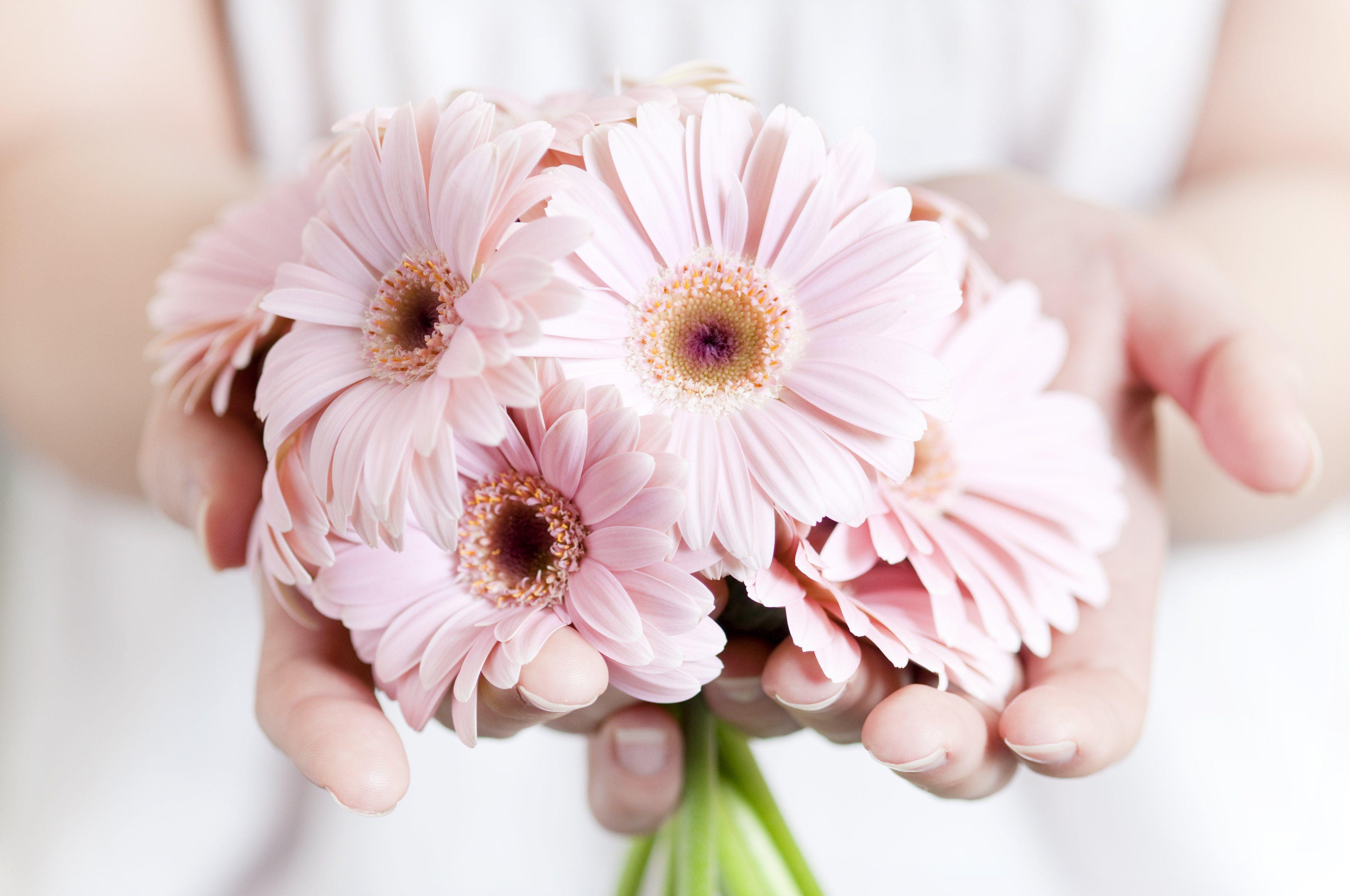 Download Hd Wallpapers Of Pink Flower Wallpaper Tumblr Hands High
