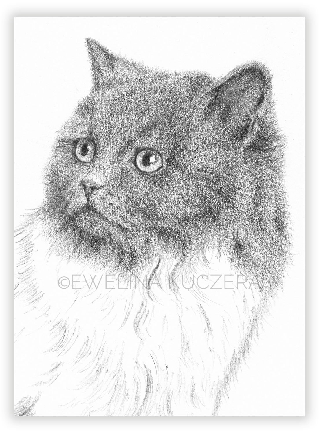 How To Draw A Cat Tutorial In 2020 Drawings Art Art Studies