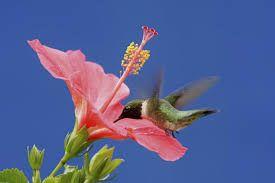 Resultado de imagen para imagenes de flores con colibries