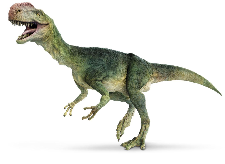 صور ديناصور انواع الديناصورات بالصور الديناصور هو نوع من الحيوانات المنقرضة منذ زمن بعيد عاش لحوالي 160 مليون Dinosaur Images Dinosaur Prehistoric Animals