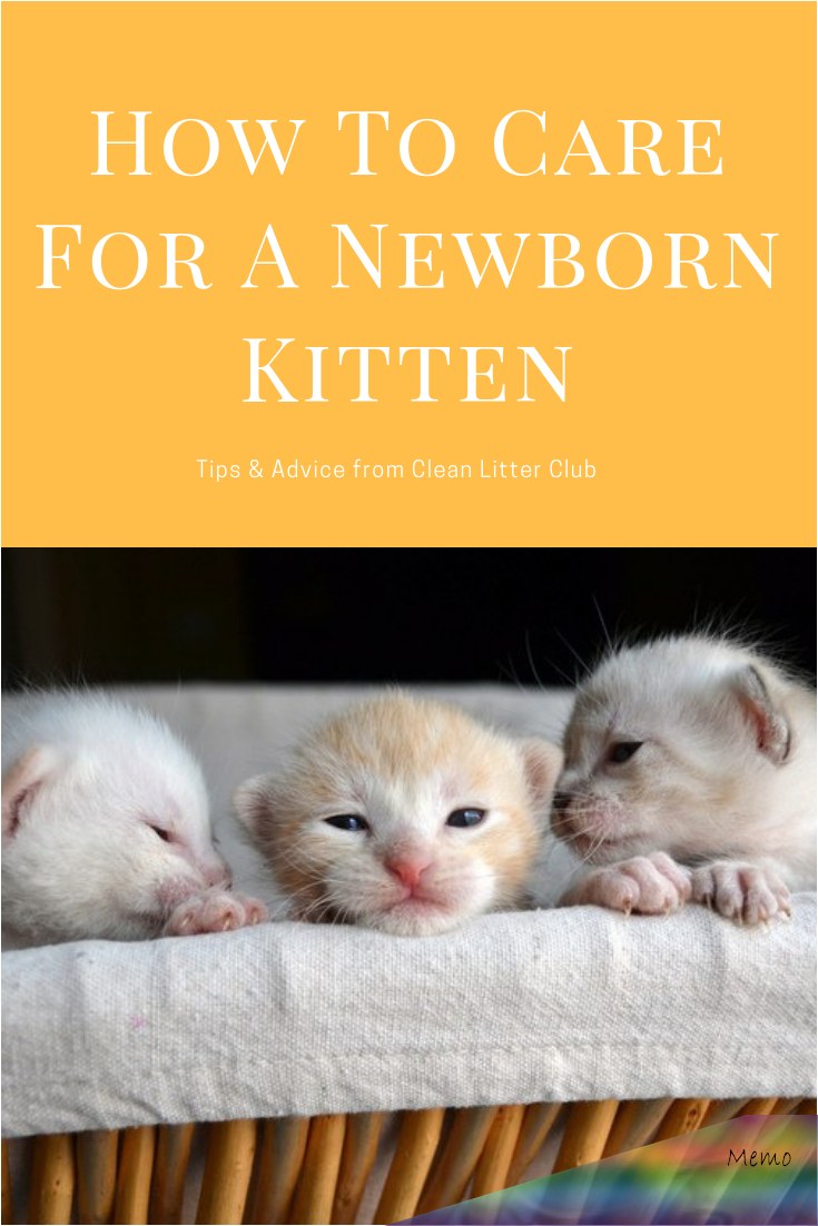 Pin By Safeera K S On Cats And Kittens In 2020 Newborn Kittens Newborn Care Taking Care Of Kittens