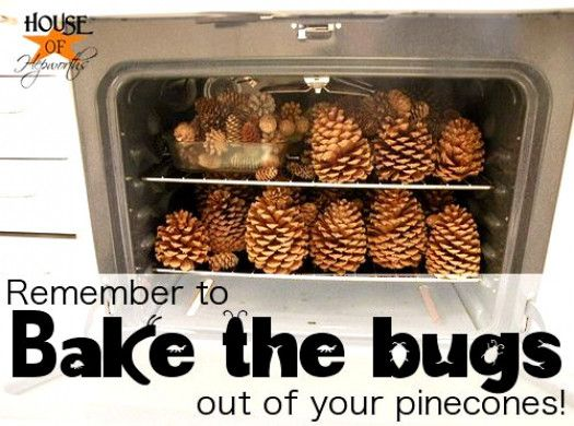 Photo of Pinecones make great decorations, but bake them first to eliminate bugs.