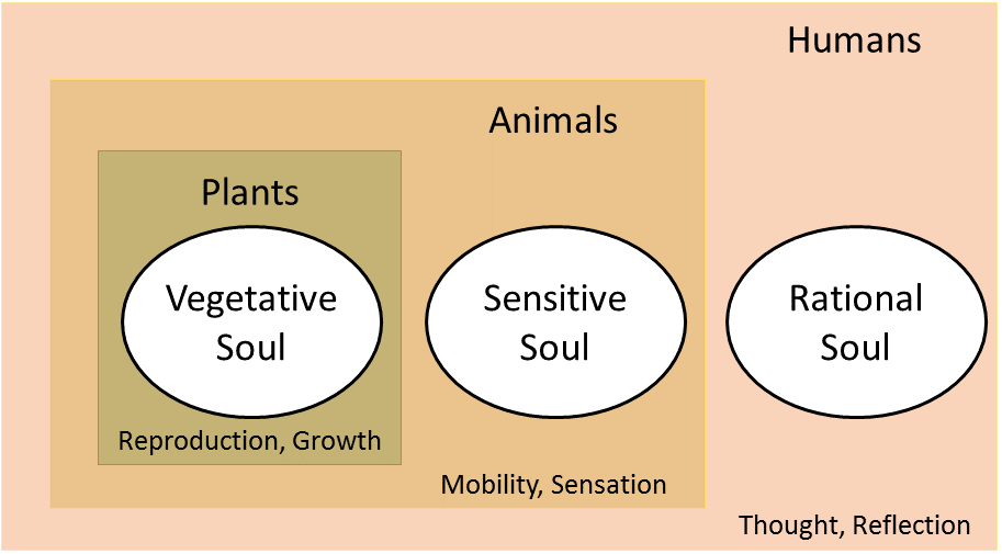 Aristotelian Soul Soul Wikipedia The Structure Of The Souls Of