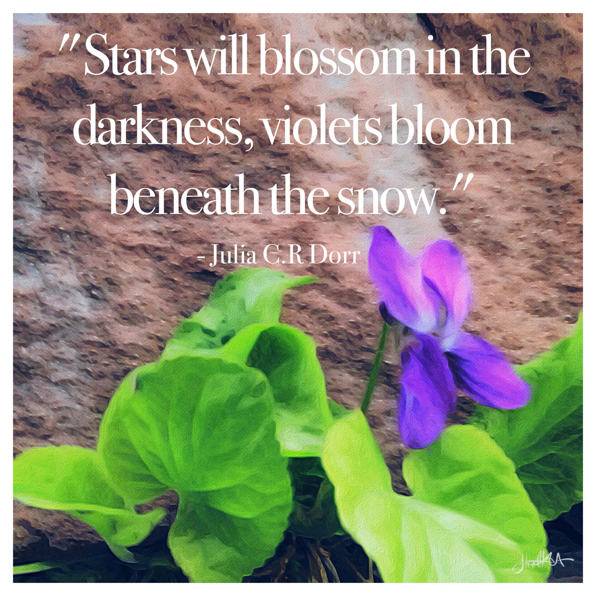 Purple Flower Quotes Akbaeenw