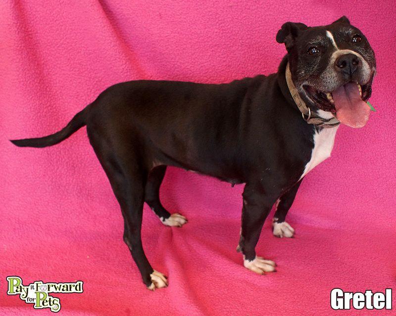 Adopt Gretel On Petfinder Homeless Pets Pet Adoption Pet Life