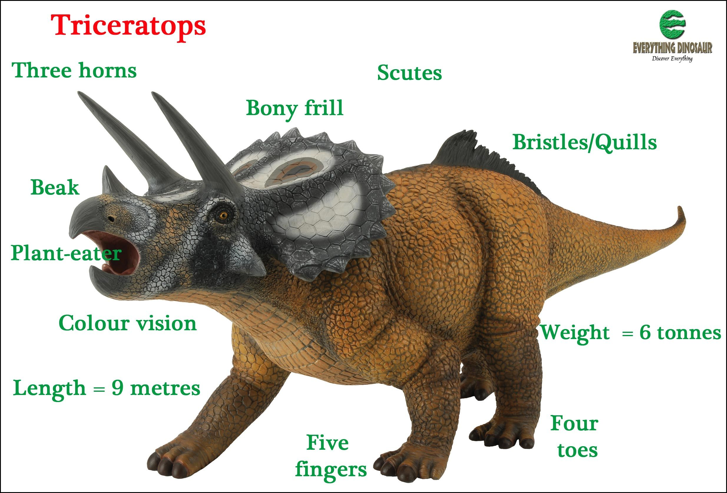 Use Dinosaurs To Help Children Develop Their Vocabulary