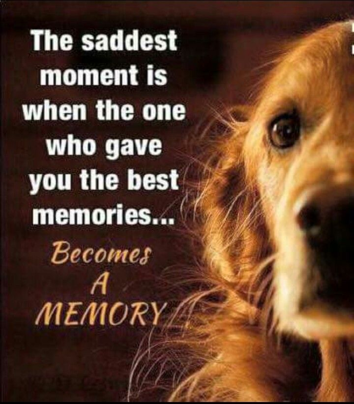 It\'ll break my heart! | Dogs | Dog quotes, Dogs, Animal quotes