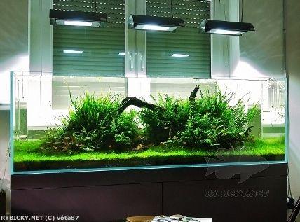Rostlinné Akvárium   Maxi Akvária   Jedno Z Výstavních Akvárií Na Mojí  Prodejně, Zatím Nedlouho