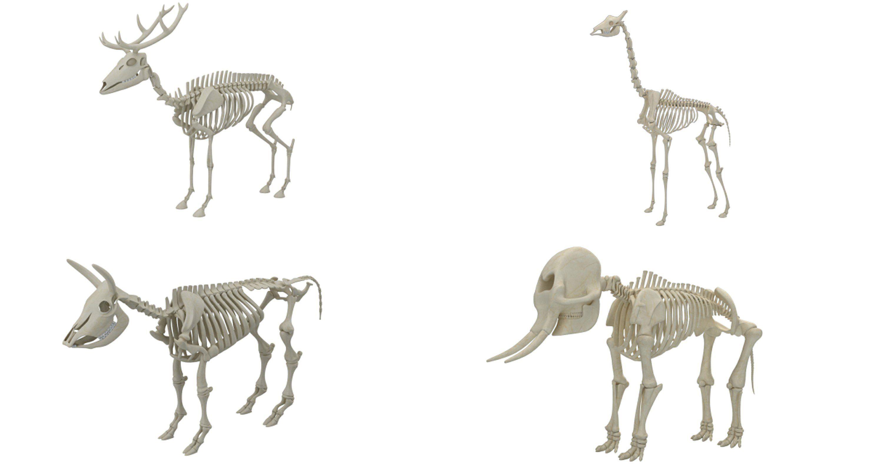 Animal Skeleton Collection 3D model Animal skeletons