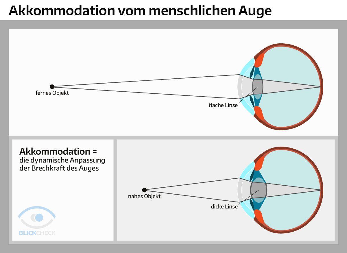 Die Akkommodation vom menschlichen Auge. | Anatomie und Physiologie ...
