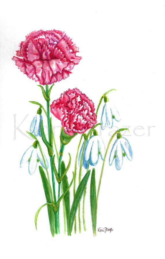 Carnation And Snowdrop Flower January Birthday Flowers Original Watercolor Painting Birth Month Fl Birth Month Flowers Month Flowers Carnation Flower Tattoo