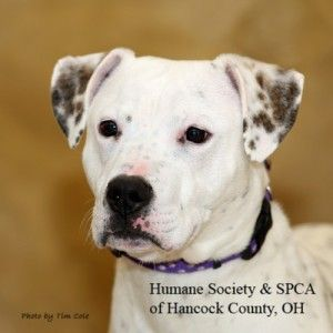 Penny Humane Society And Spca Of Hancock County Findlay Oh Humane Society