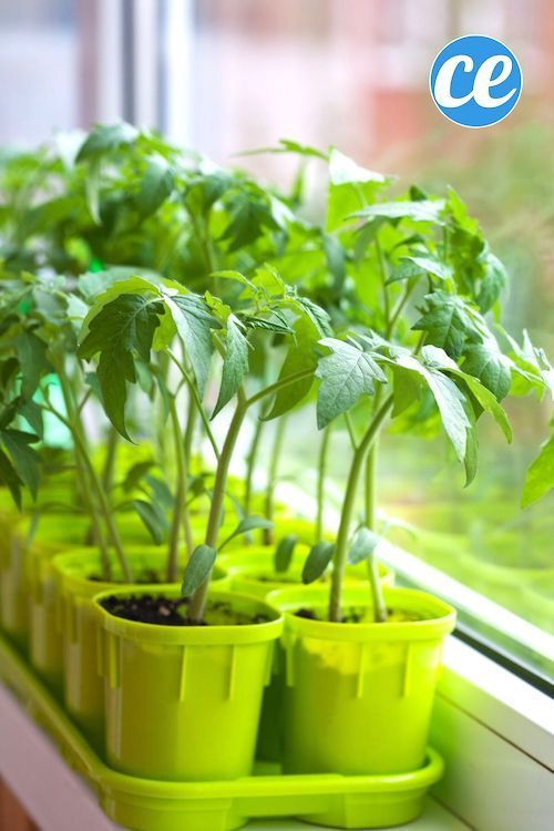 Épinglé sur Plantes et Jardinage