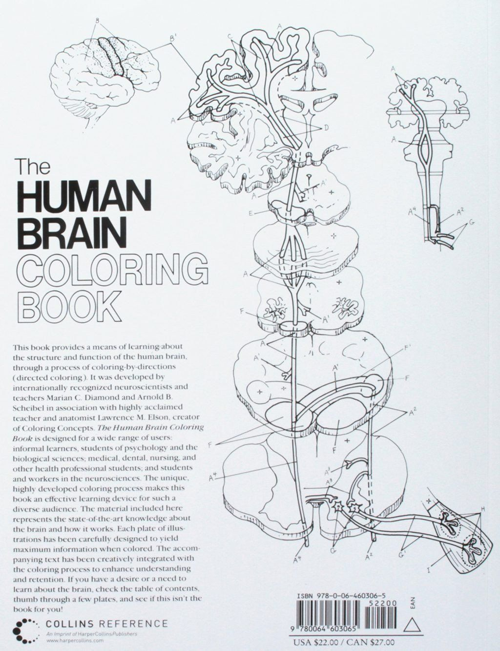 The Human Brain Coloring Book Luxury Saunders Veterinary Anatomy Coloring Book Answers Pdf Free In 2020 Coloring Books Anatomy Coloring Book Star Wars Coloring Book [ 1333 x 1024 Pixel ]