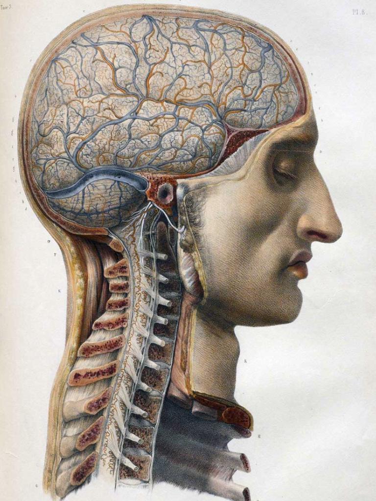 QuipImaage | ANS Nitric Oxide | Pinterest | Anatomía, Medicina y ...