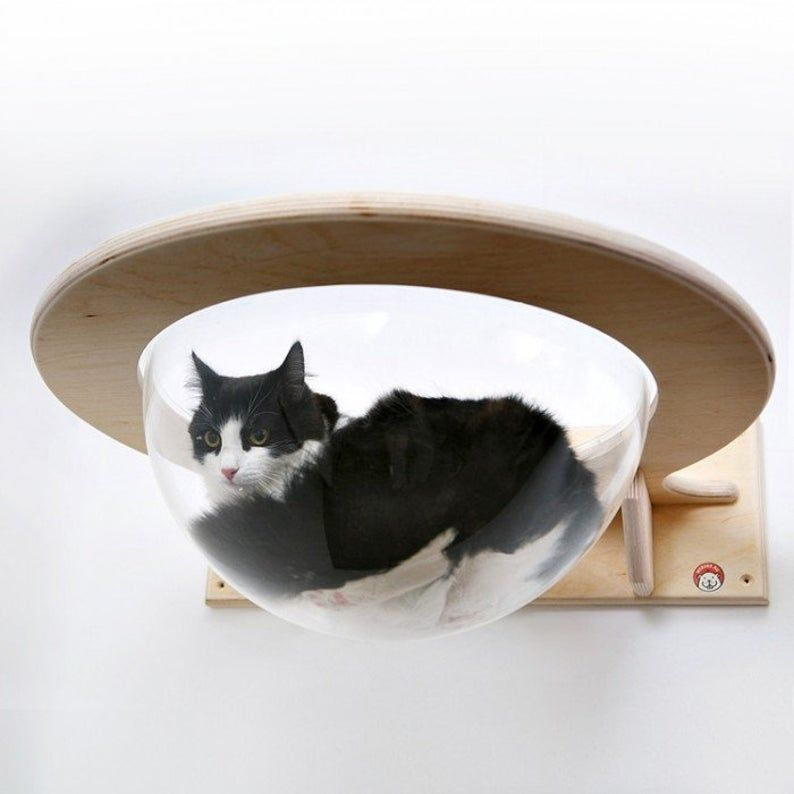 Wall Mounted Transparent Chaise Lounge For Cats Toumey In 2021 Cat Wall Shelves Cat Room Cat Wall