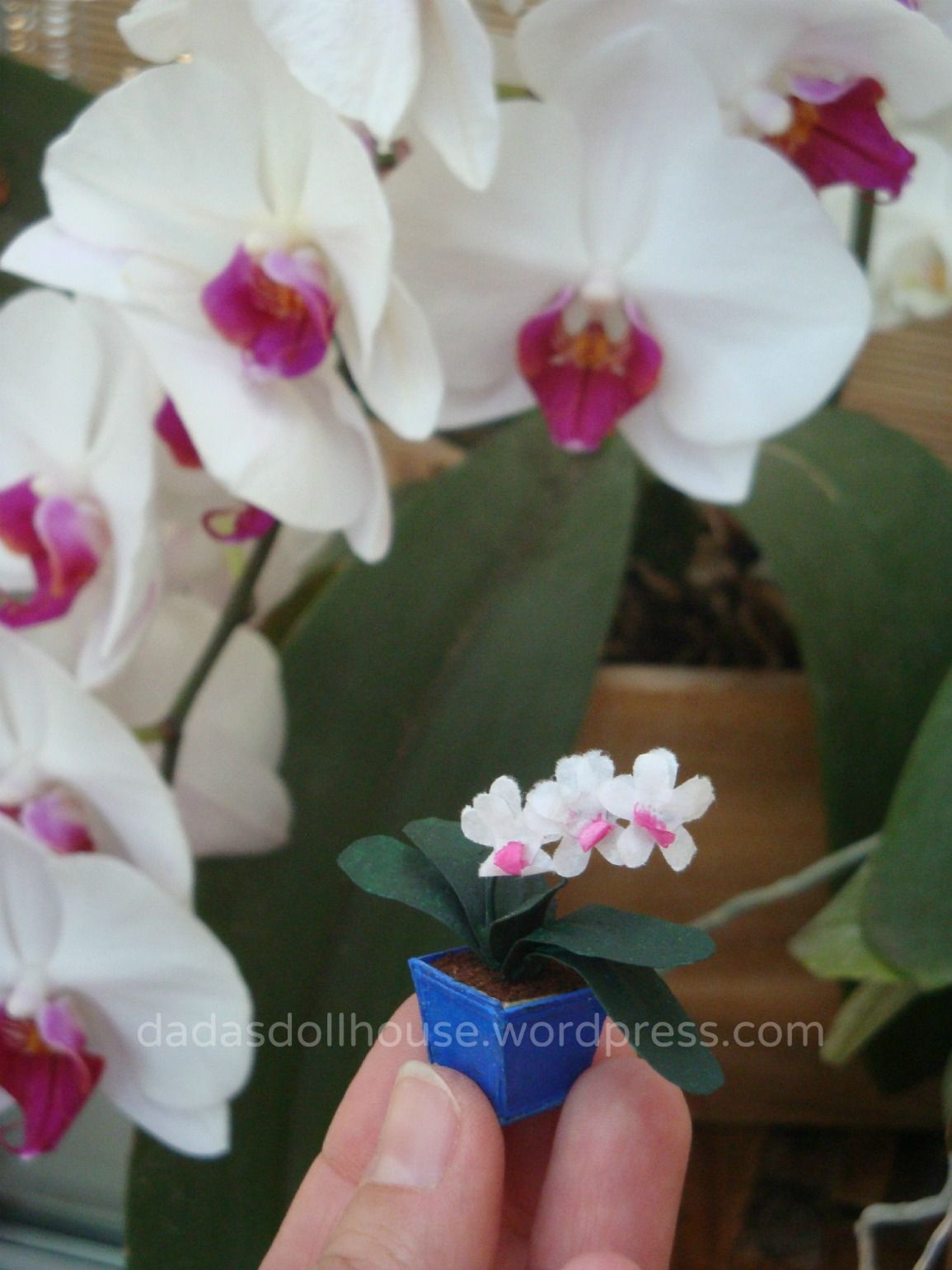 Le Orchidee In Vaso Potted Orchids Pflanzen Orchideen Blumen