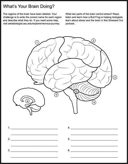 Christian home school hub brain nervous system neuroscience christian home school hub brain nervous system neuroscience teaching materials ccuart Choice Image