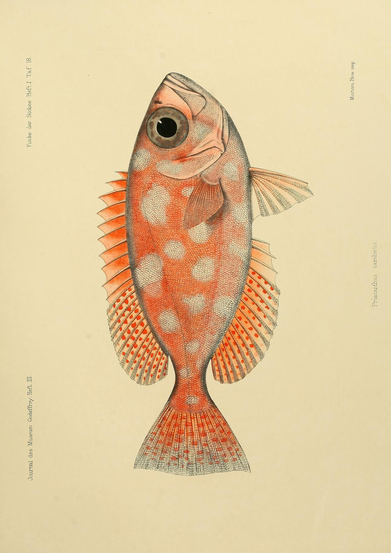 deel van een vis