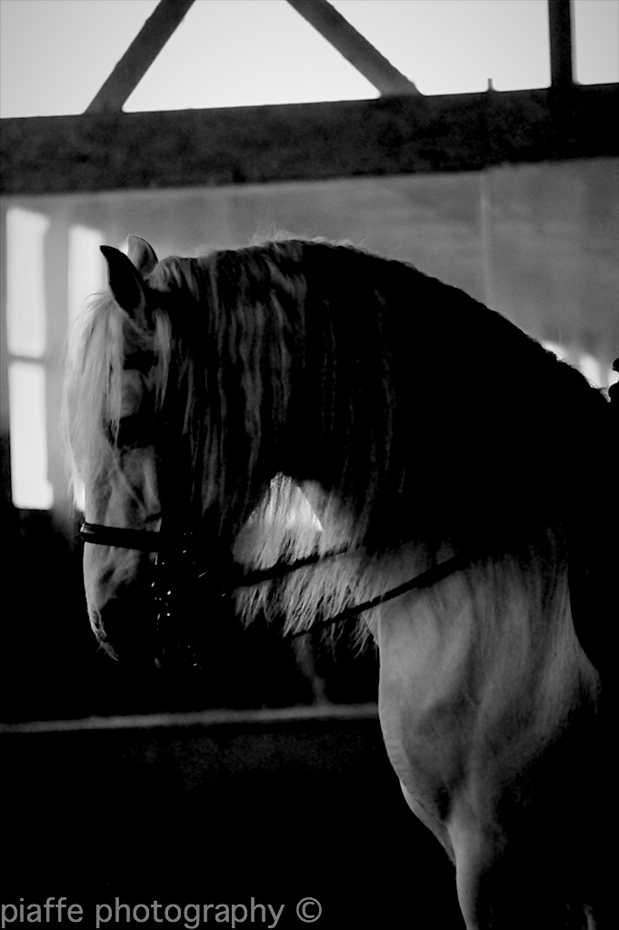 for all of you who liked my dressage photos :)
