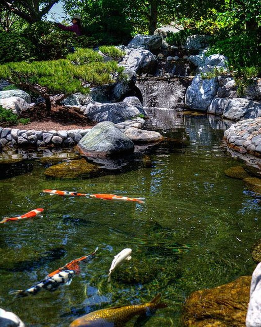 50 beautiful backyard fish pond garden landscaping ideas for Koi pond water