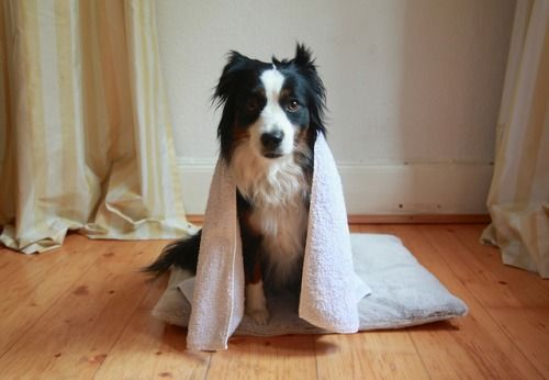 minueted: towel days by virginhoney on Flickr.