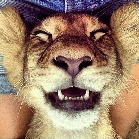 Cute lion smiling