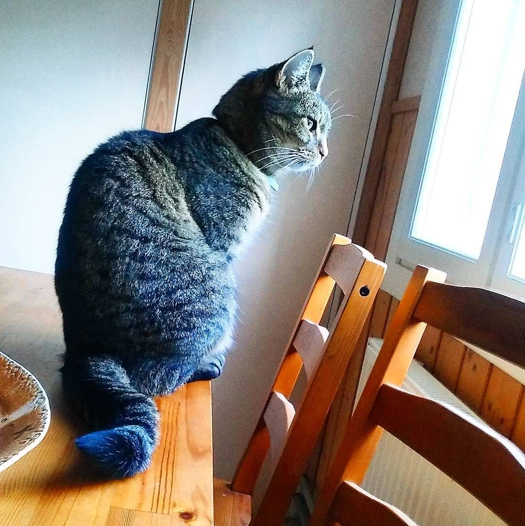Just Waiting For The Frost To Disappear 5 More Minutes And I M Outta Here Cats Kitty 猫 Katzen Petcat Katter Cat Day Cats Pets Cats