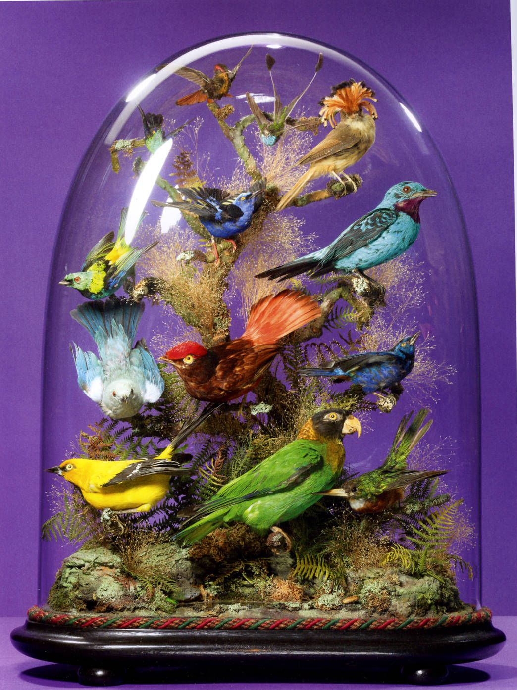 Beauties in bell jars a review of john whitenightus