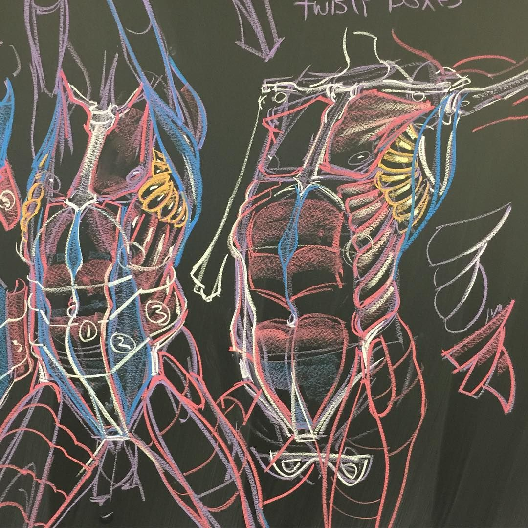 Simple Anatomy Lecture Of The Torso For My Monday Inventive Drawing
