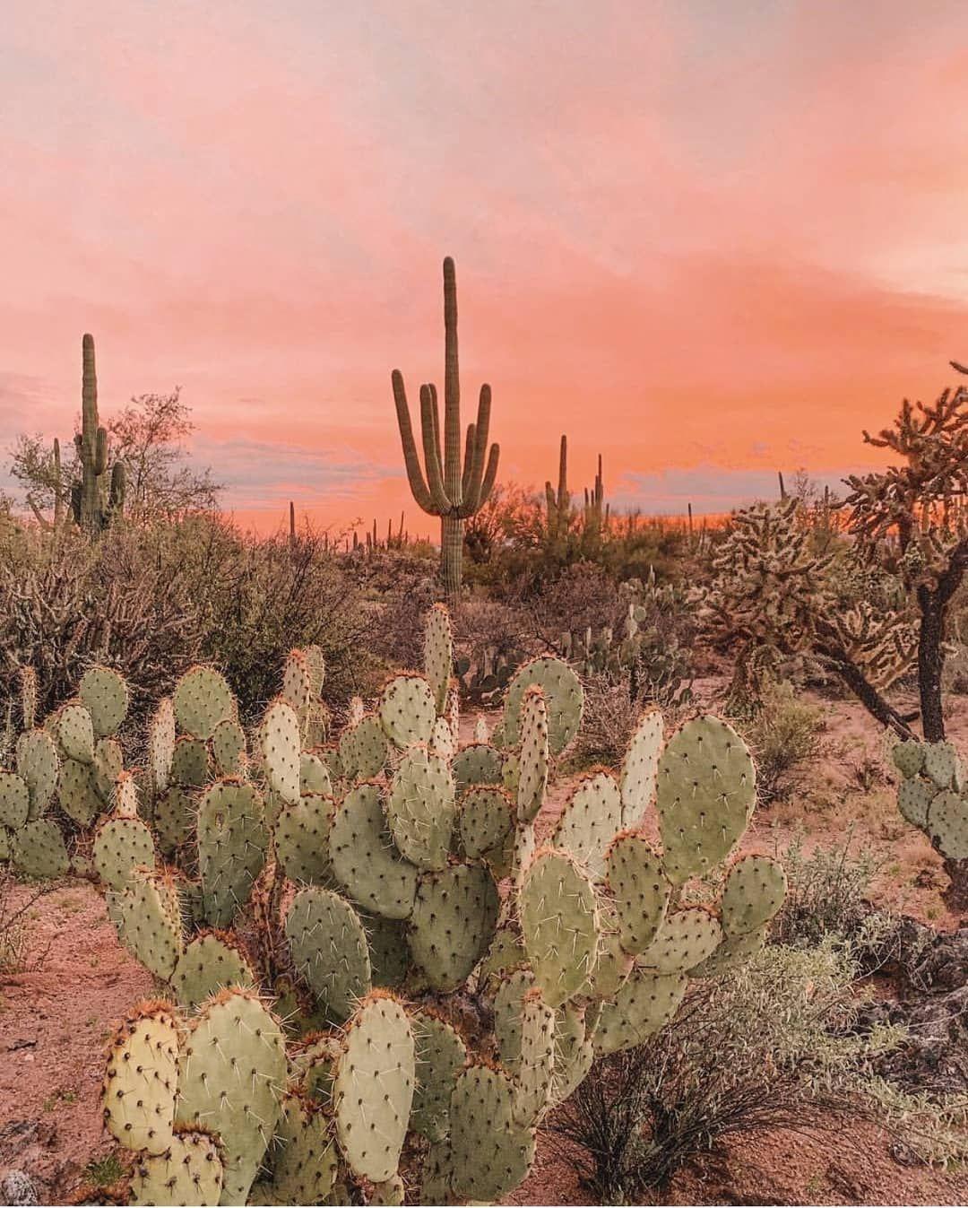 """ARNHEM on Instagram: """"Lost amongst the desert sunsets ✨?Giving us some cactus garden inspo….."""