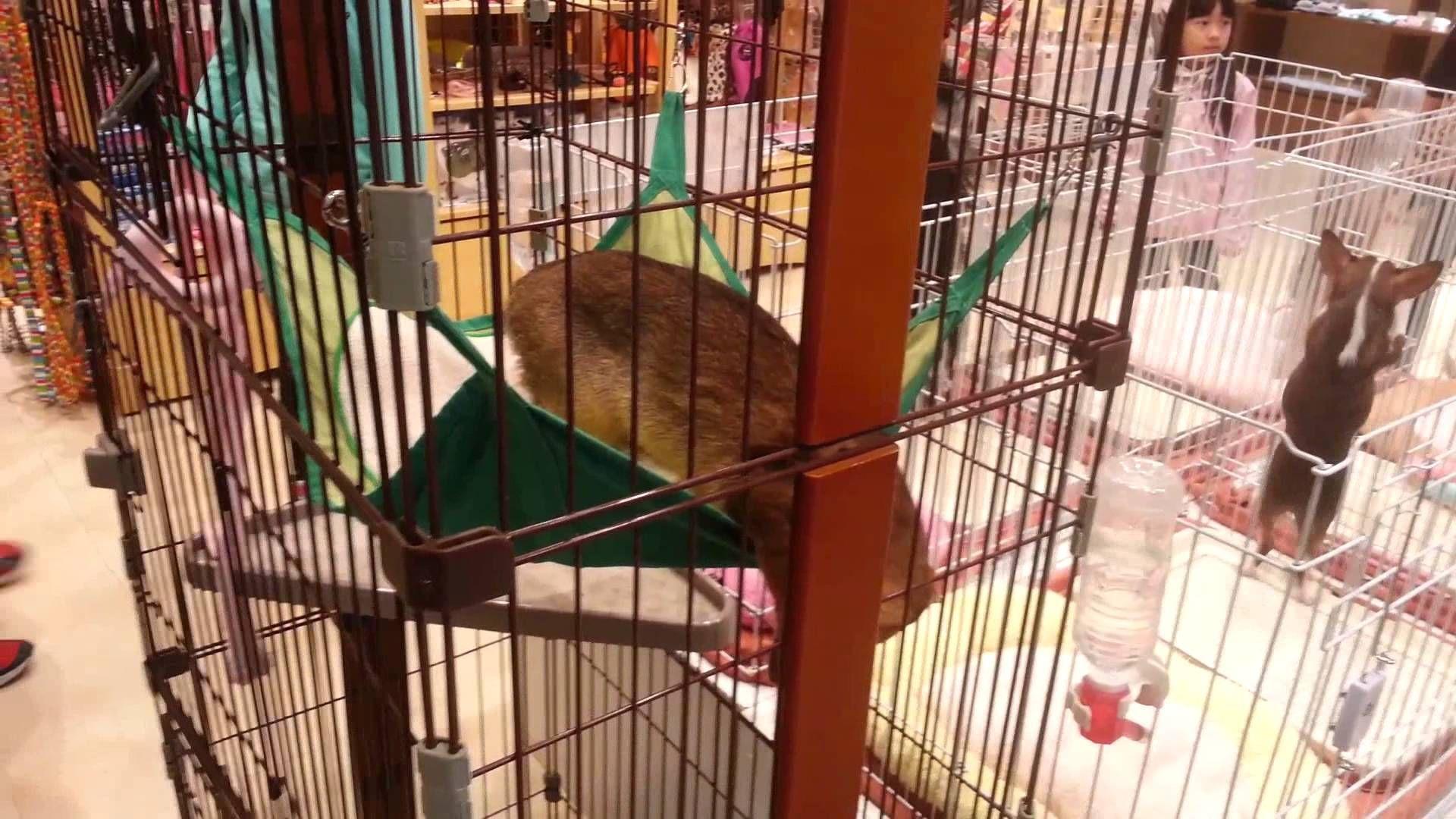 Japanese Pet Store Pet store, Pets, Baby animals