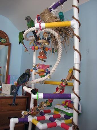 Pictures Pvc Bird Stand Plans Parrotforums Quakers Play 8