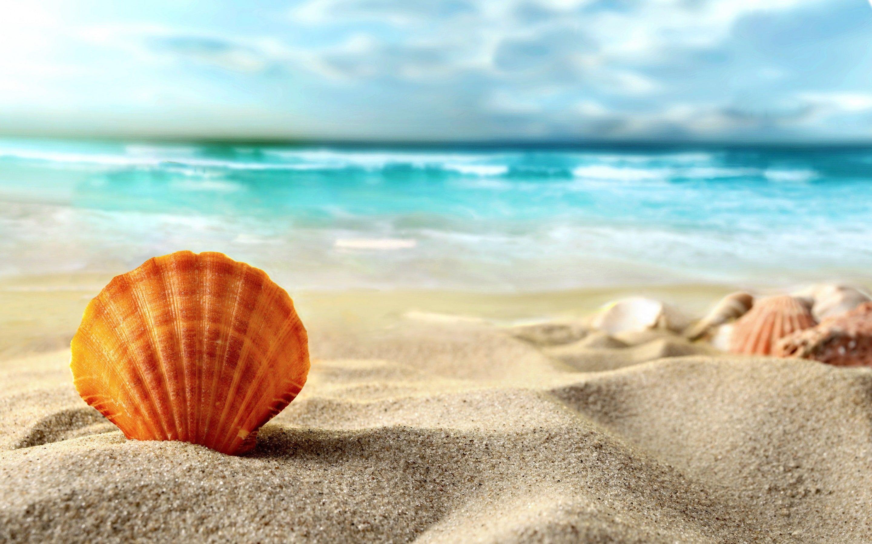 Shell Beach Sea Beach Sand Shell Sea Summer 2k Wallpaper Hdwallpaper Desktop Beach Sunset Wallpaper Beach Sand Beach Wallpaper