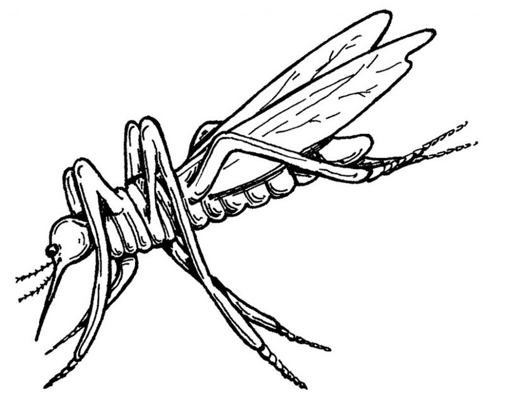 Free Printable Mosquito Coloring Pages For Kids Bird Coloring