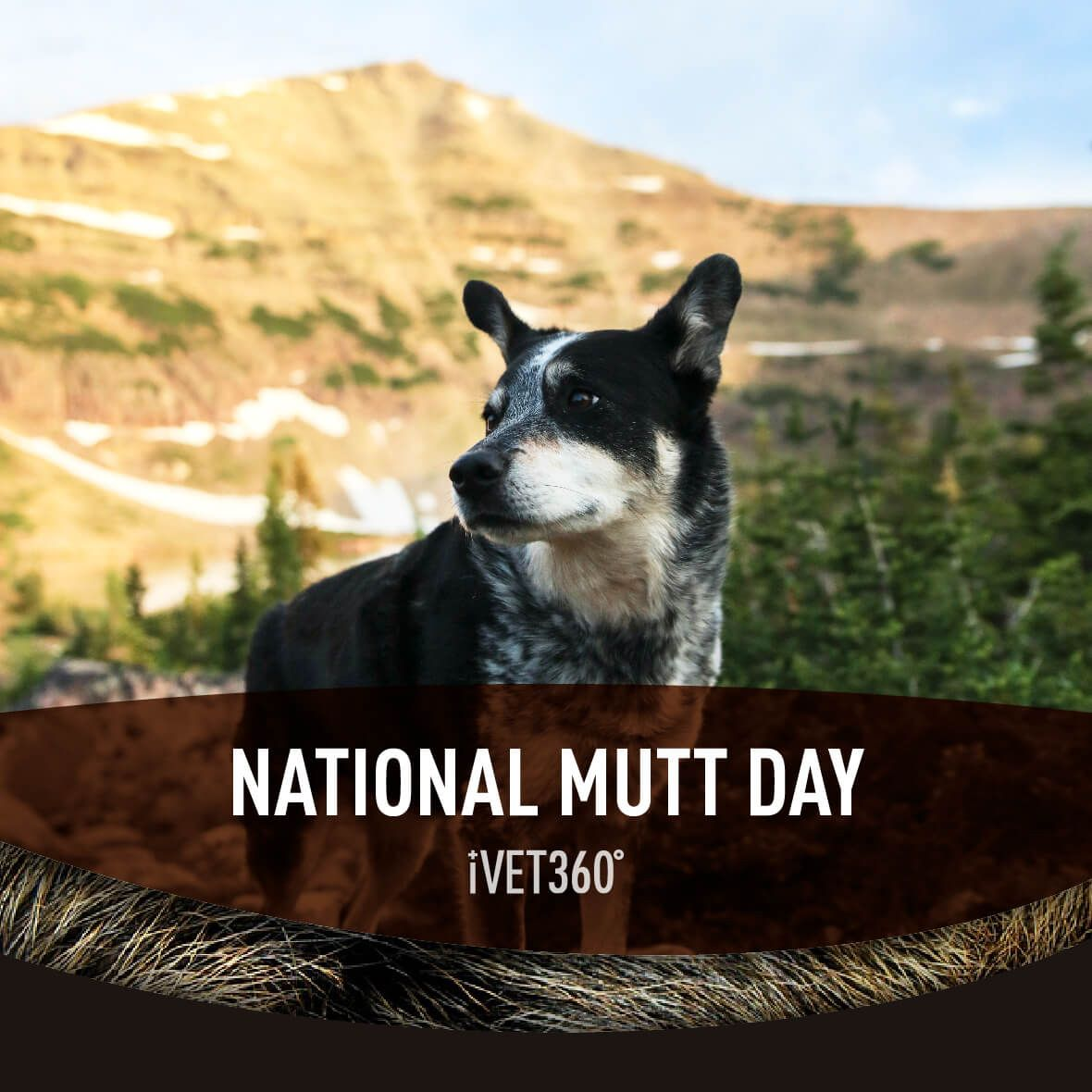 National Mutt Day National mutt day, Pet holiday, Mutt