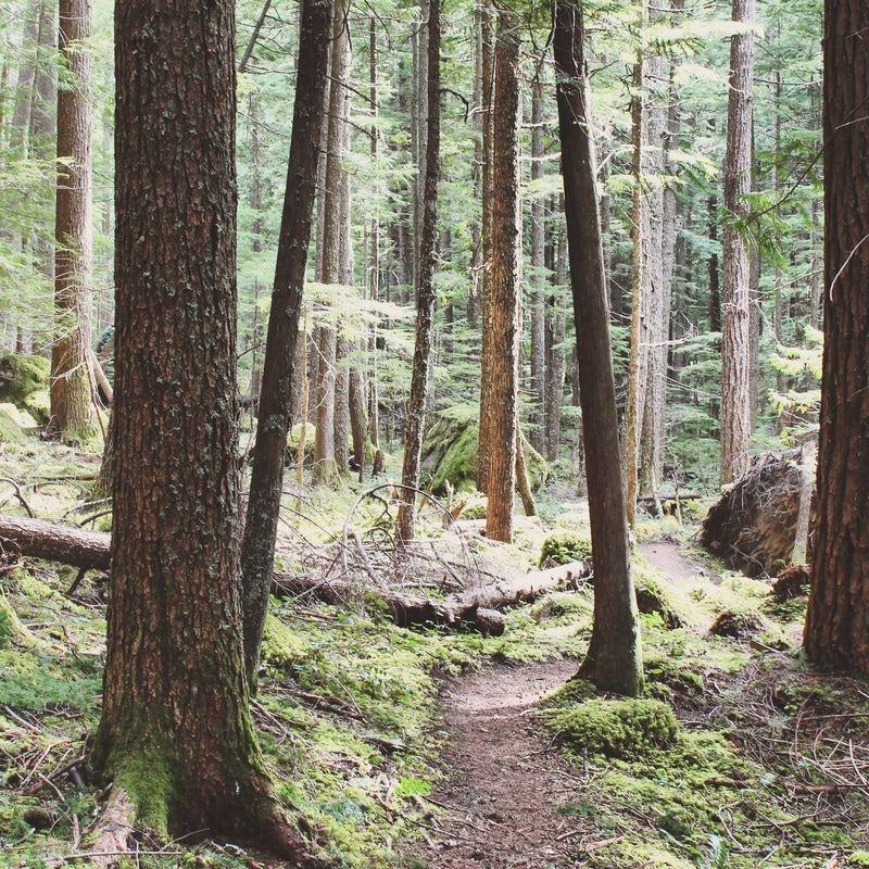 Snoquera Falls Hike | easy hike near seattle | huckleberryrainblog.weebly.com