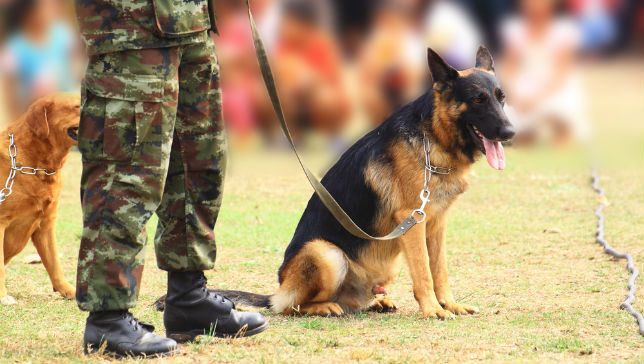 Act would reunite dogs with their handlers, keeping them from being abandoned overseas.