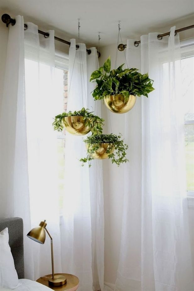 logo air house plants plants rooted cuttings plants for shaded balcony tropical plants pictures and names images lowes outdoor plants and flowers best place to buy plants...