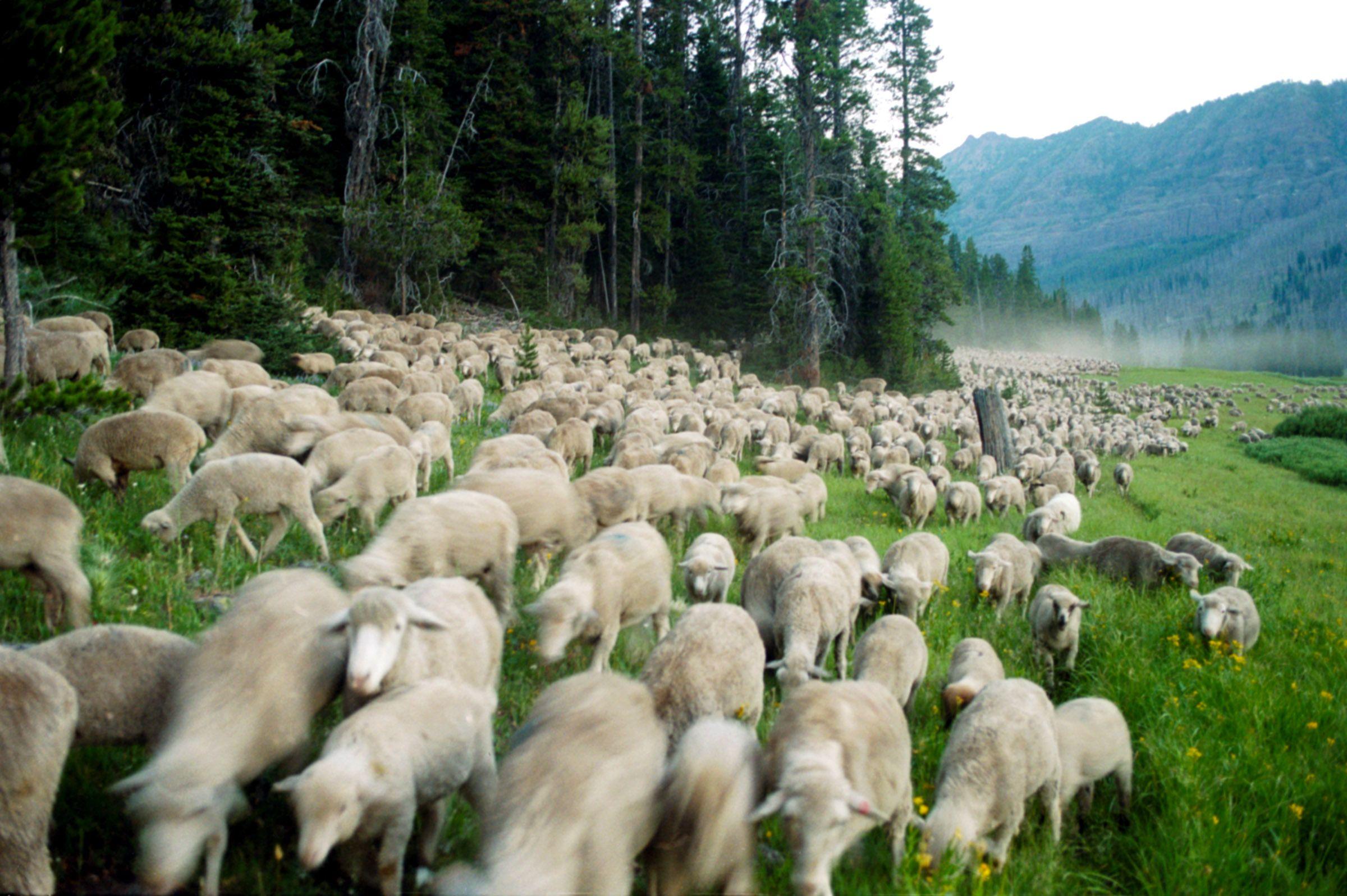 baa baa black sheep netflix
