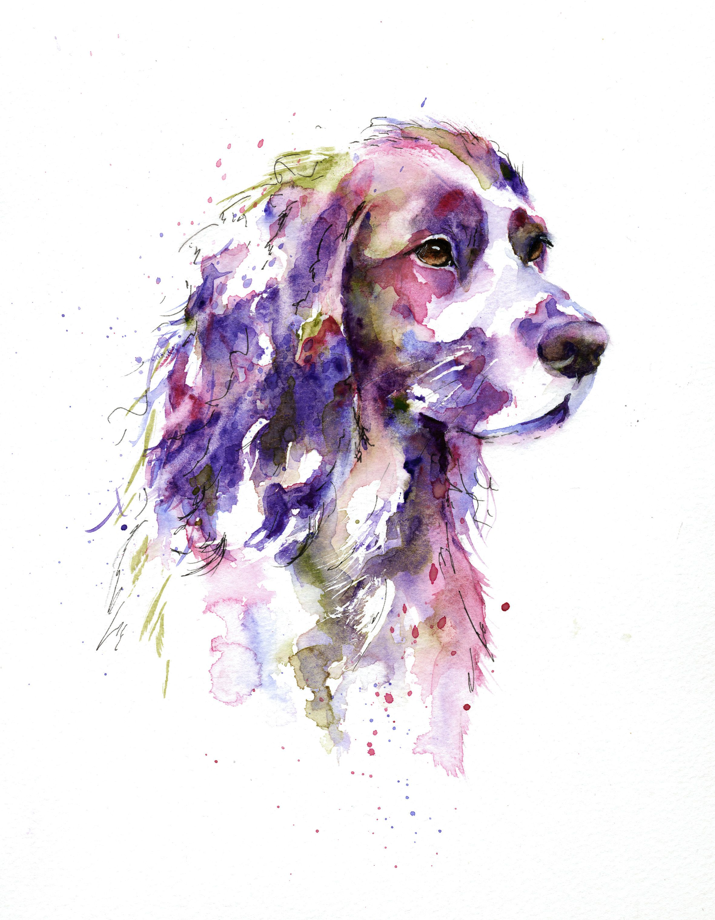 Working Cocker Spaniel In Watercolour By Artist Jane Davies