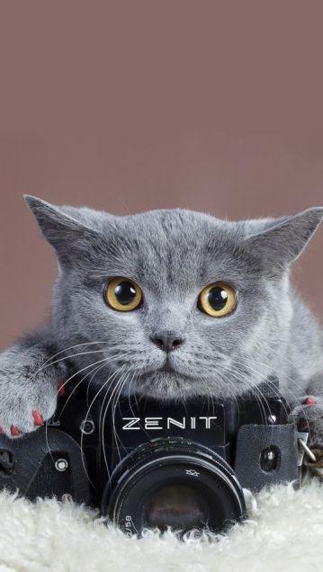 カメラの上の猫の動物壁紙