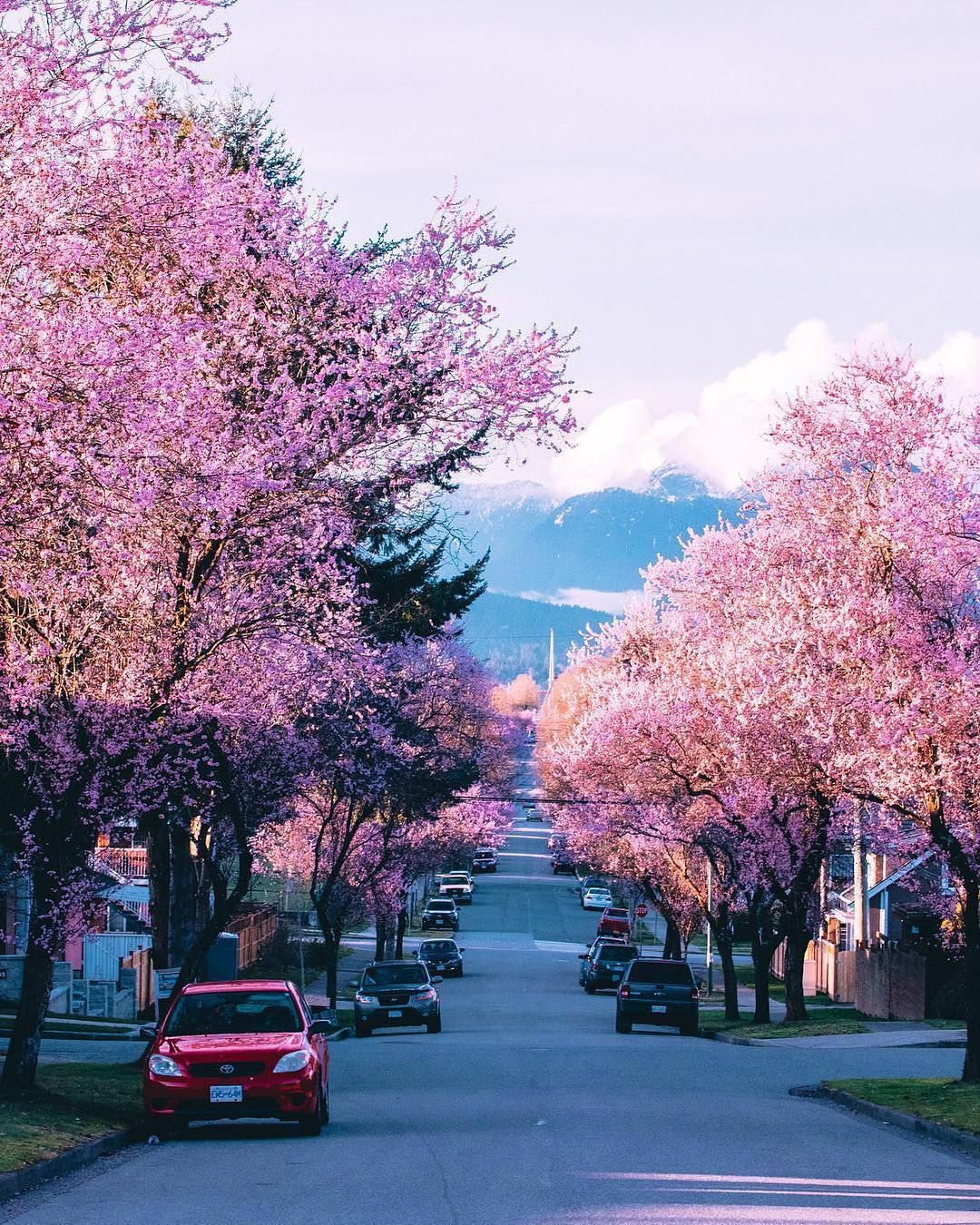 Narcity Canada On Instagram Can T Beat The Sunshine And Cherry Blossoms In Vancouver Pictures By Sta Cherry Blossom Festival Vancouver Instagram