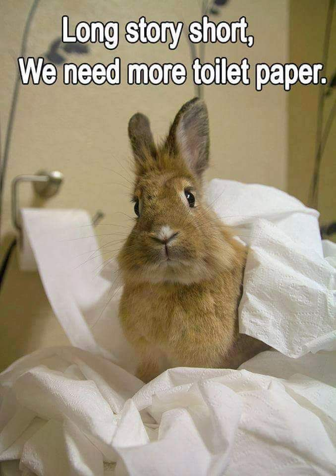 Rabbit Ramblings Funny Bunny Memes Important Stuff To Consider